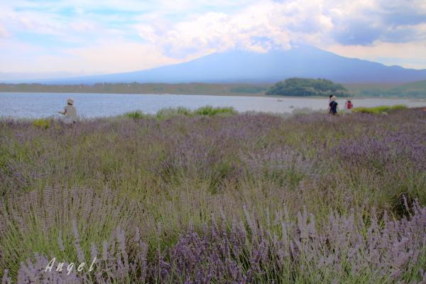 河口湖の富士山(201307211430)