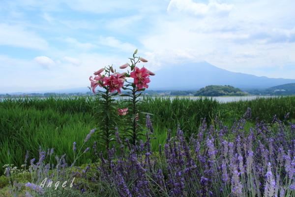 河口湖の富士山(201307211357)