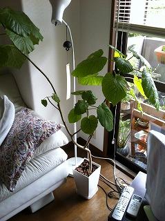 植物 01