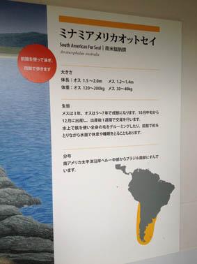 京都水族館 8