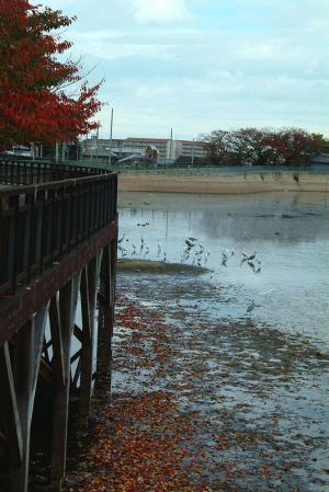 egrets-redleaves