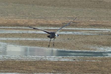 hcrane-landing2