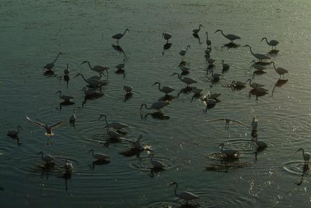 herons-againstlight