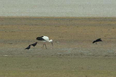 stork-landing