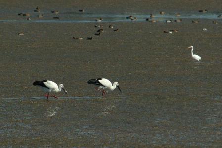 twin-storks