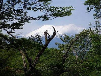富士山が近い