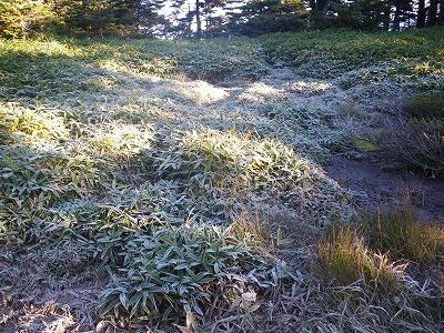 霜が降りている