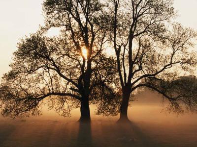 Tree_convert_20130303213648.jpg