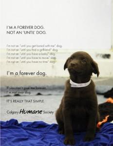 forever-dog1-232x300.jpg