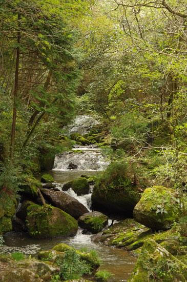 鶏鳴の滝7
