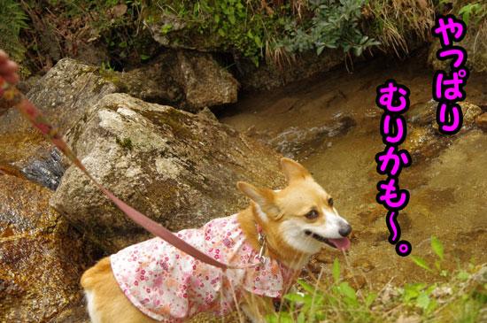 鶏鳴の滝6