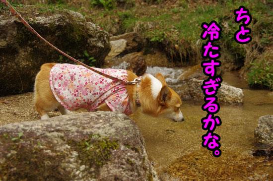 鶏鳴の滝5