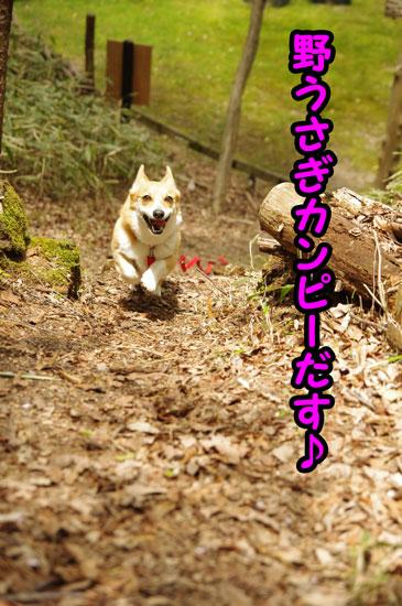 陶芸の森3
