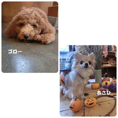 2014-10-121.jpg