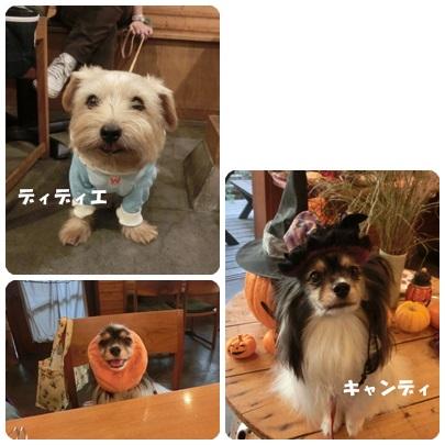 2014-10-123.jpg