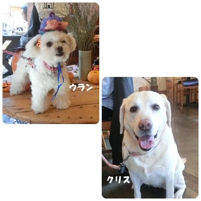 2014-10-124.jpg