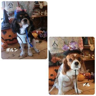 2014-10-125.jpg