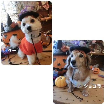 2014-10-127.jpg
