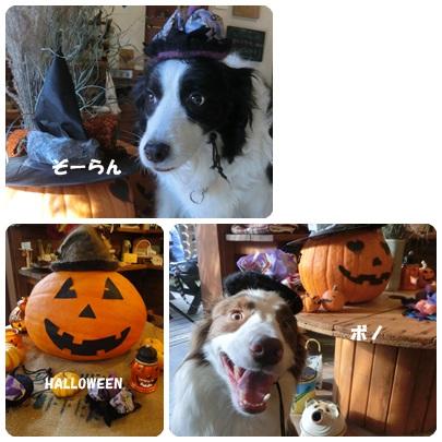 2014-10-141.jpg