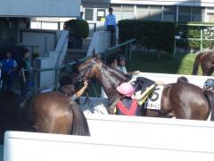 レース後:レイヌドネージュ