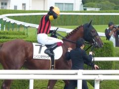本馬場入場:エイシンキサナドゥ