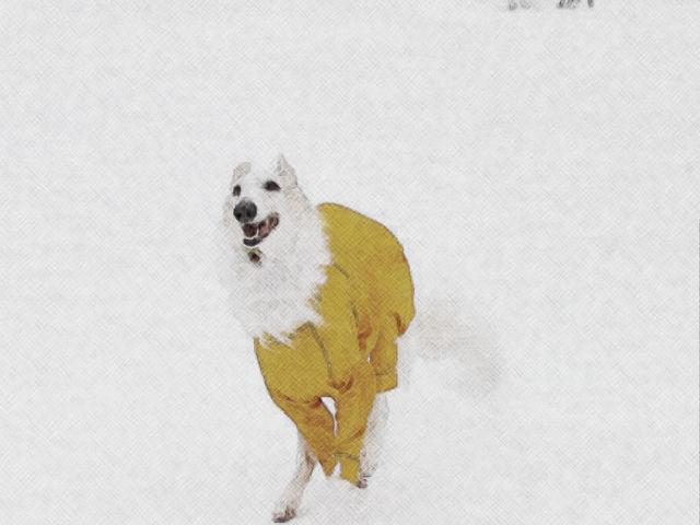 雪印ワッティ