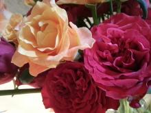 ワッティの薔薇