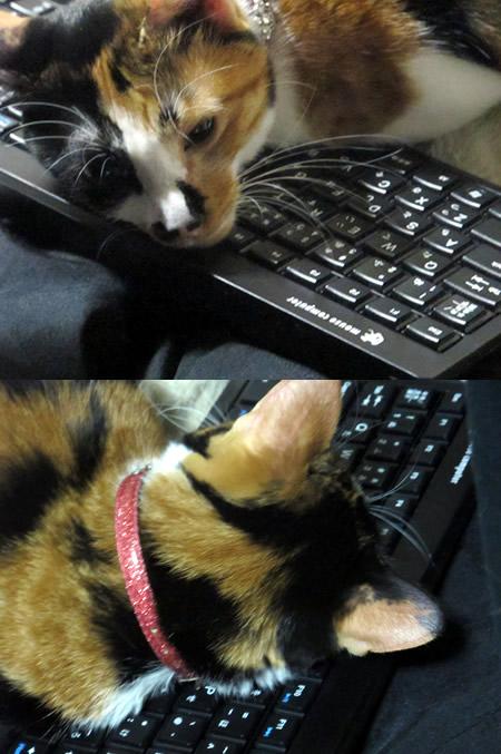 131020_cat02.jpg