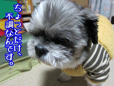 0108-01_20130108165310.jpg
