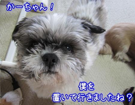 0224-03_20130224211204.jpg