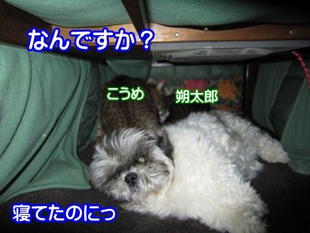 0308-01_20130308134057.jpg
