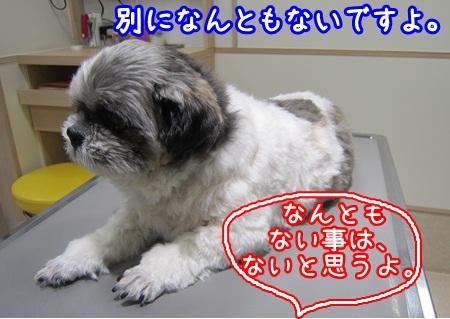 1229-04_20121229213217.jpg