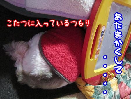 1230-01_20121230212138.jpg