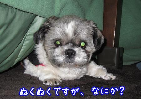 1230-02_20121230212137.jpg