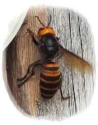 0508-ハチ