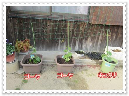 0513-野菜