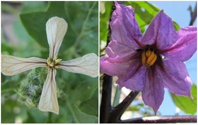 0610-野菜の花