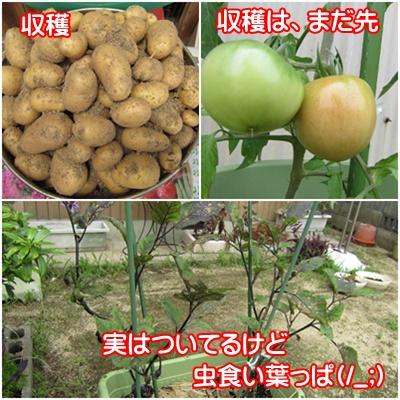 0625-野菜