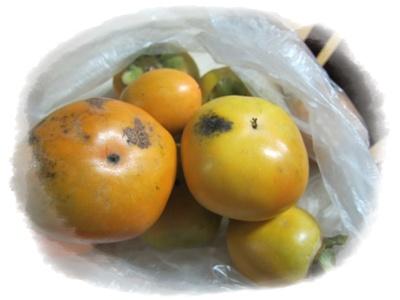 1003-柿
