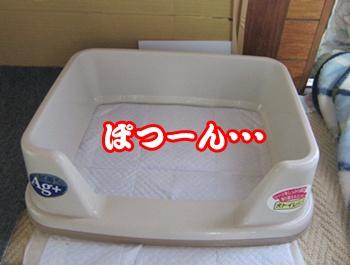 1005-トイレ