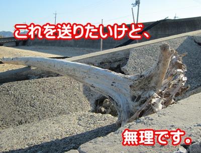 1213-流木