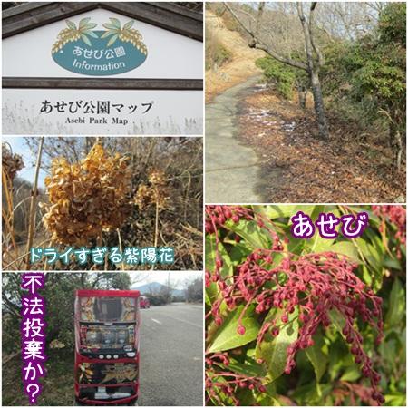 0120-あせび公園