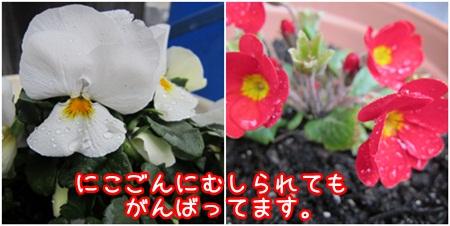 0215-花