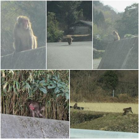 0217-猿