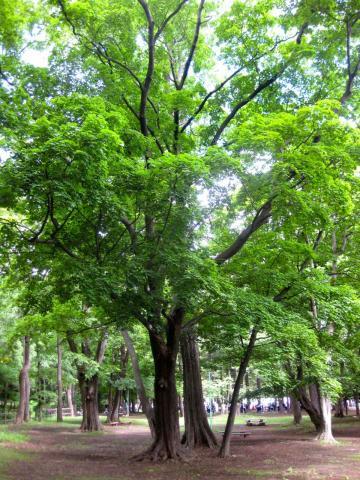 円山公園624