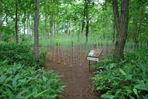 森の蜃気楼