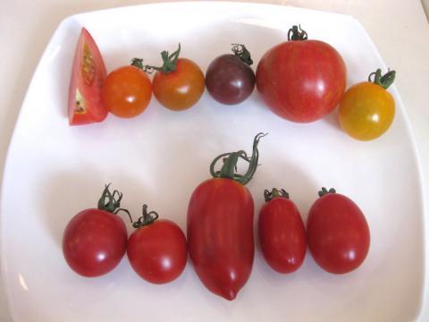 野菜教室トマト822