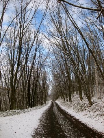 森の道雪1231