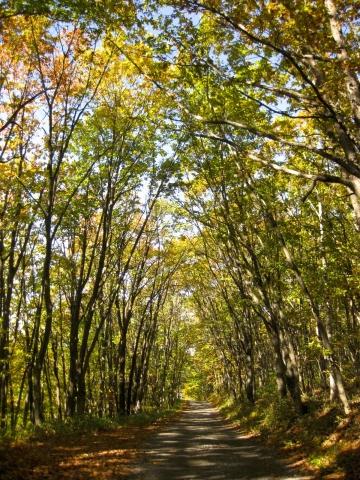 森の道秋1231