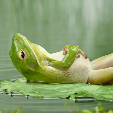 frog-after-dinner-ipad-background.jpg